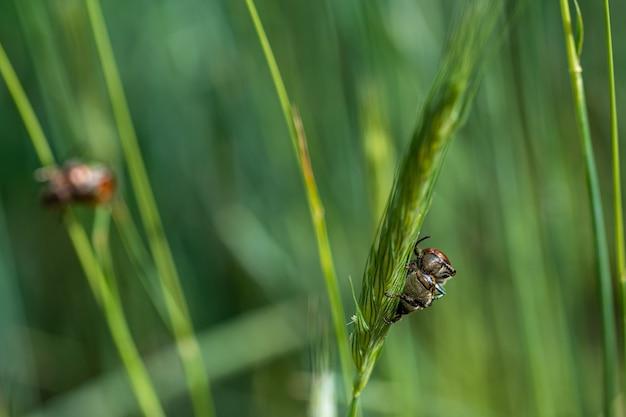 Primer plano de los insectos en el pasto de trigo en el bosque
