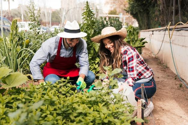 Primer plano de jardinero masculino y femenino examinando las plantas en el huerto