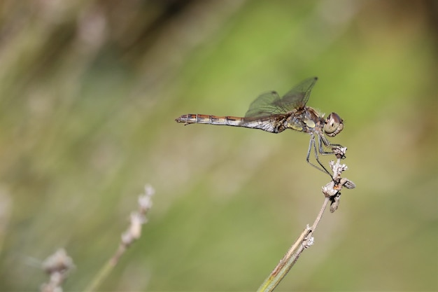 Primer plano de libélula con un fondo borroso