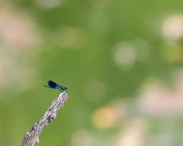 Primer plano de una libélula en una rama bajo la luz con un fondo borroso