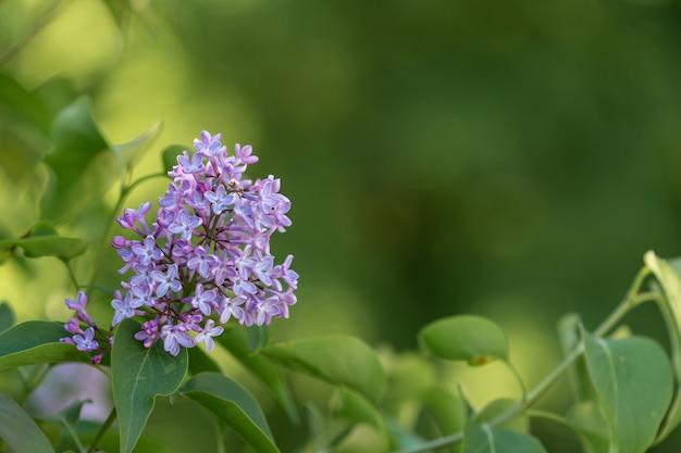 Primer plano de una linda flor sobre un fondo borroso
