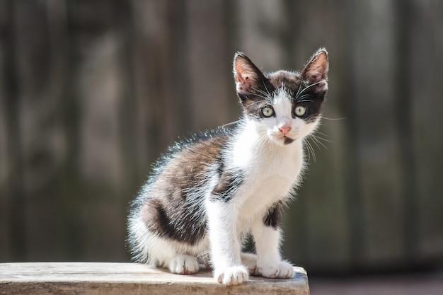 Primer plano de un lindo gatito doméstico
