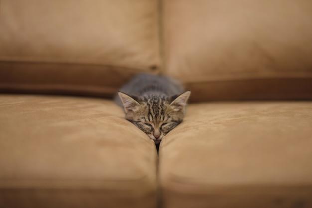 Primer plano de un lindo gatito durmiendo entre las almohadas de un sofá