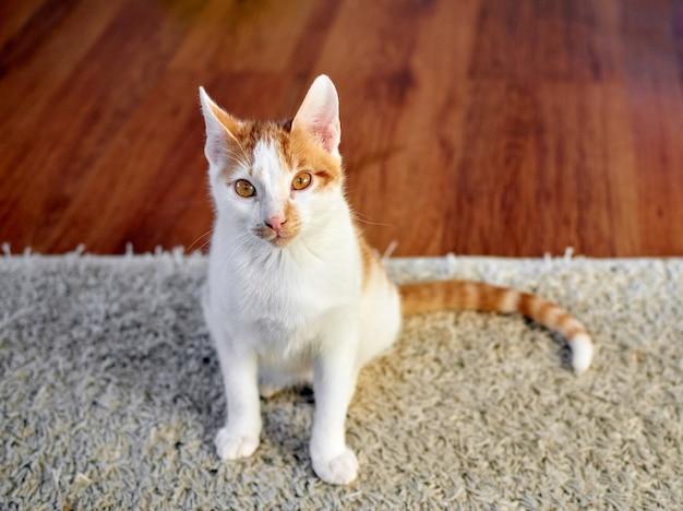 Primer plano de un lindo gato atigrado blanco y jengibre sentado en la alfombra