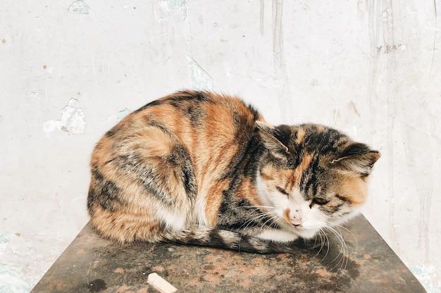 Primer plano de un lindo gato doméstico