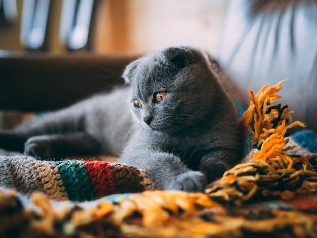 Primer plano de un lindo gato gris sentado sobre una manta colorida en la habitación durante el día