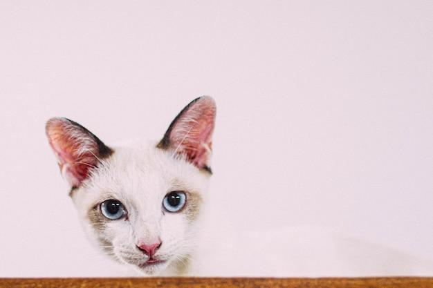 Primer plano de un lindo gato sentado en una caja de cartón sobre una pared blanca