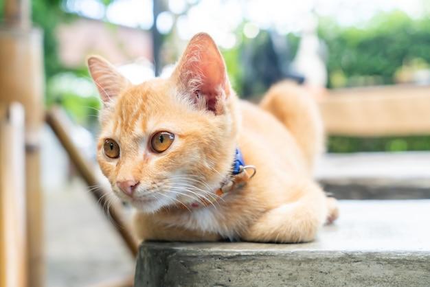 Primer plano, lindo, naranja, bebé gato