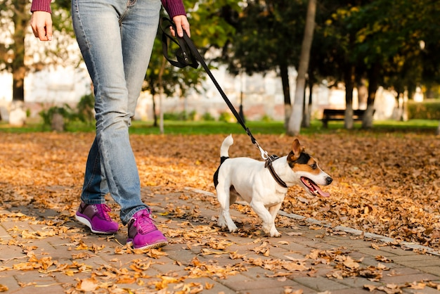 Primer plano lindo perrito caminando al aire libre