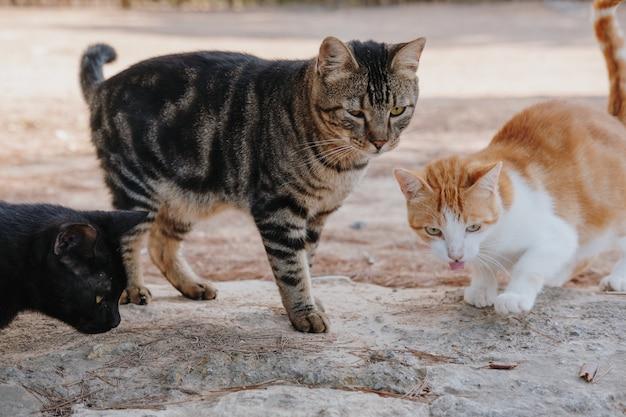 Primer plano de lindos gatitos de pie en el suelo fuera