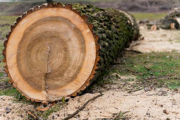 Primer plano de madera para fogata