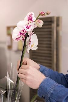 Primer plano de una mano de florista masculina colocando la hermosa orquídea blanca en el florero