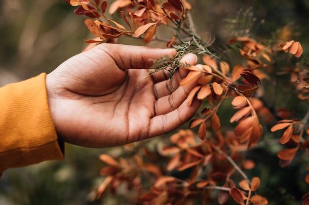 Primer plano de una mano masculina excursionista tocando las hojas de la planta