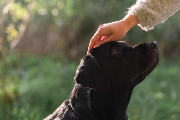 Primer plano de la mano de la mujer acariciando la cabeza de perro en el parque