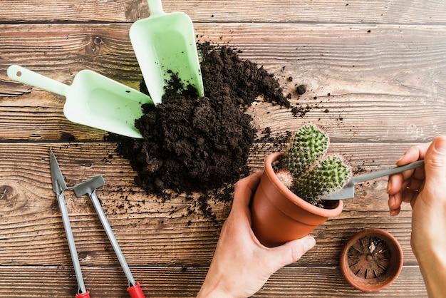 Primer plano de la mano de la mujer que planta la planta de cactus en el escritorio de madera