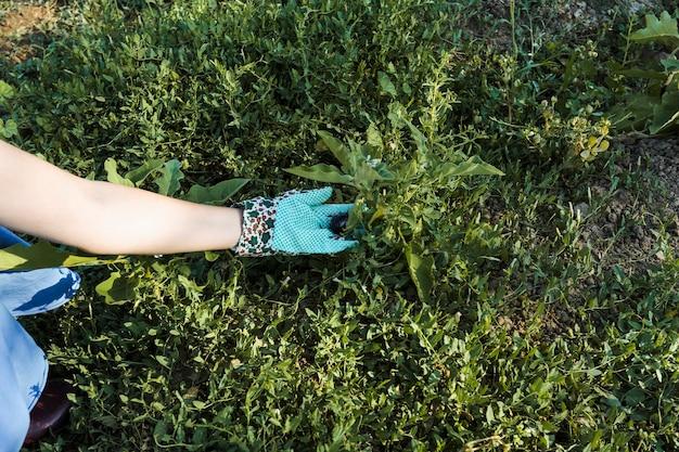 Primer plano de la mano de la mujer que sostiene la planta