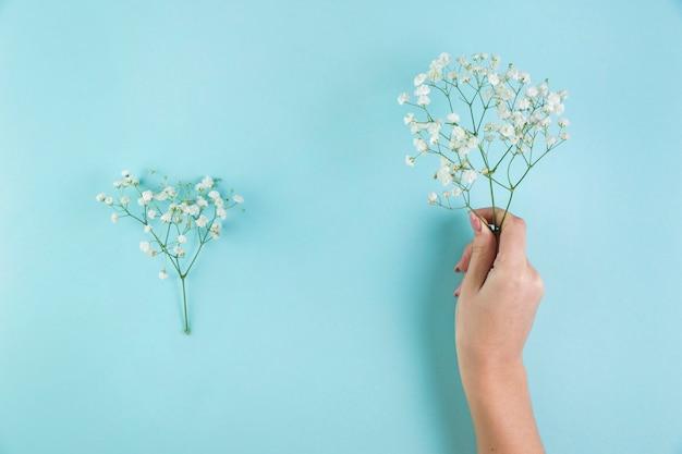 Primer plano de la mano de una mujer sosteniendo las flores de la respiración del bebé contra el fondo azul