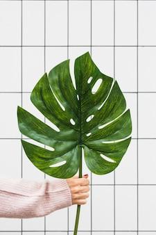 Primer plano de la mano de una mujer sosteniendo una gran jungla tropical monstera contra la pared blanca