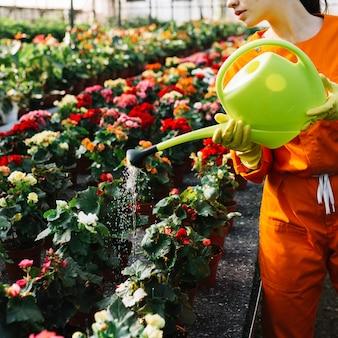 Primer plano de la mano de una mujer vertiendo agua en flores en invernadero