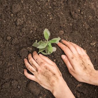 Primer plano de la mano de una persona plantando plántulas en el suelo
