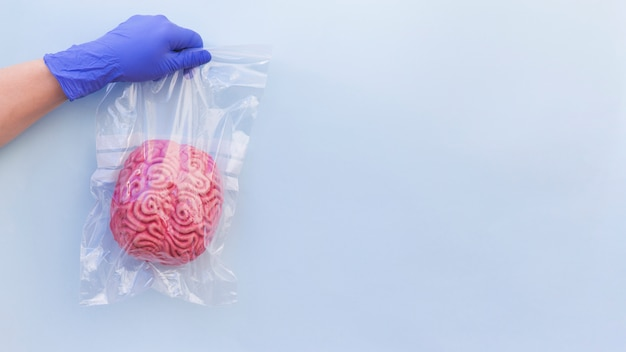 Primer plano de la mano de una persona que lleva un guante quirúrgico que sostiene un modelo de cerebro humano en la bolsa de plástico