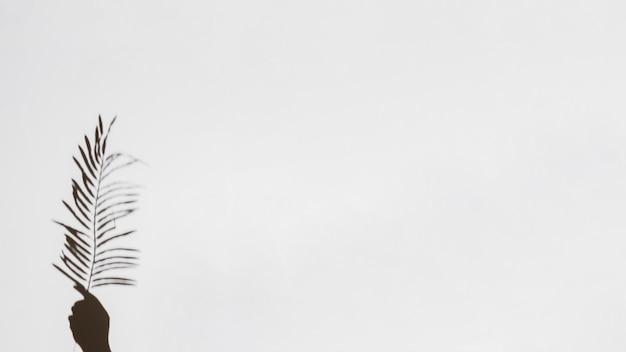 Primer plano de la mano que sostiene la hoja de palma sobre fondo blanco