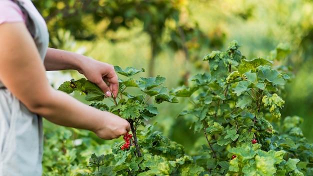 Primer plano mano recogiendo frutas