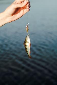 Primer plano de mano sosteniendo el cebo de pesca con peces capturados contra el lago
