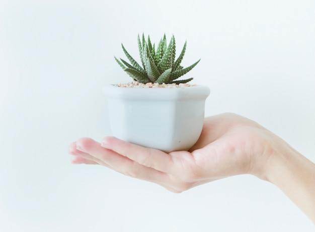 Primer plano de mano sosteniendo una olla con un cactus