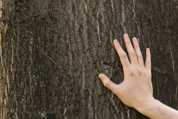 Primer plano de la mano tocando el tronco del árbol