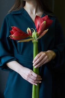Primer plano de manos femeninas sosteniendo una flor roja hippeastrum en un oscuro