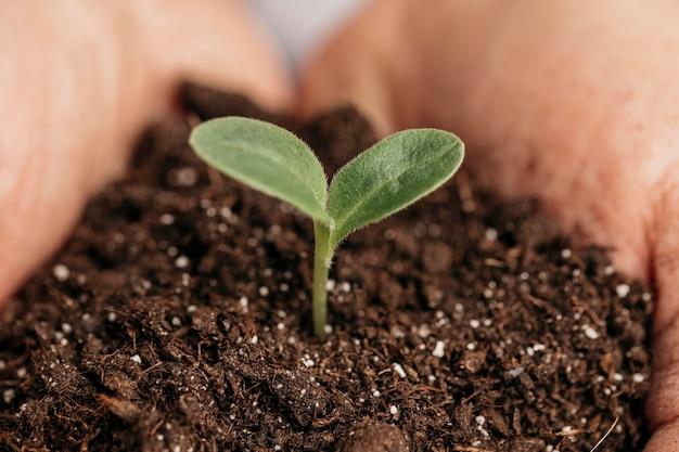 Primer plano de manos masculinas sosteniendo el suelo y la planta