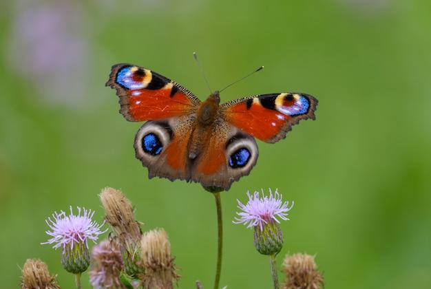 Primer plano, mariposa, en, flor