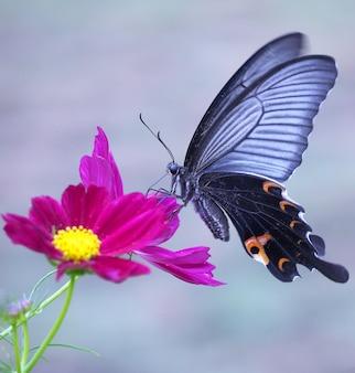 Primer plano de una mariposa sobre una flor de color rosa brillante