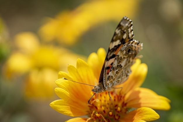 Primer plano de una mariposa sobre una hermosa flor amarilla