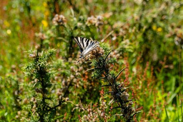 Primer plano de una mariposa sobre una planta silvestre