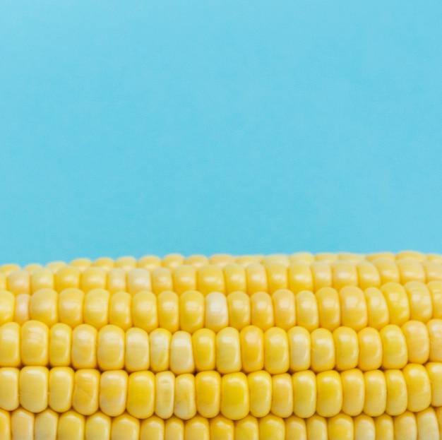 Primer plano de una mazorca de maíz contra el fondo azul