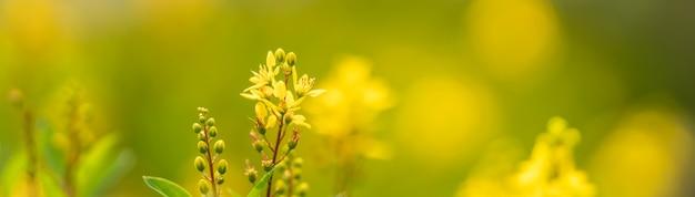 Primer plano de una mini flor amarilla sobre fondo gereen borrosa