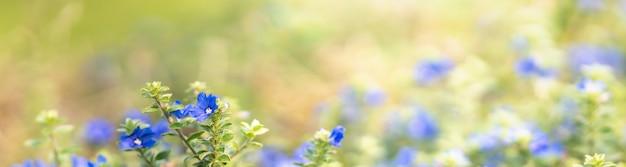 Primer plano de una mini flor púrpura azul sobre fondo gereen borrosa.