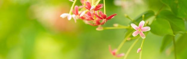 Primer plano de una mini flor rosa y roja sobre fondo gereen borrosa.