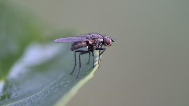 Primer plano de una mosca negra sobre una hoja verde con un agujero en ella