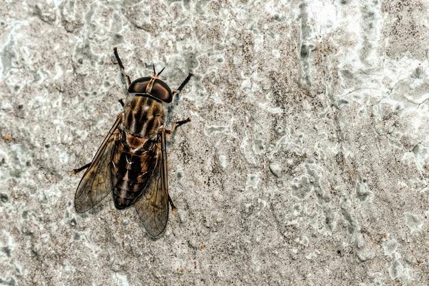 Primer plano de mosca en la pared