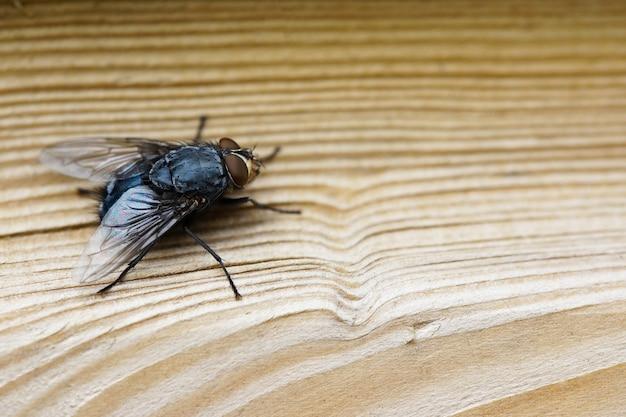 Primer plano de una mosca sobre una superficie de madera marrón