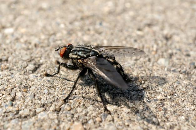 Primer plano de una mosca en el suelo bajo la luz del sol con un fondo borroso