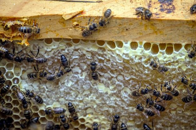 Primer plano de muchas abejas en el marco de los panales haciendo miel