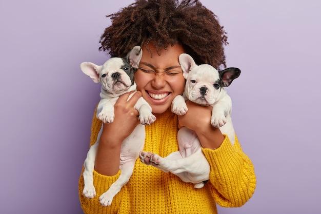 Primer plano de mujer complacida con pelo afro tiene dos cachorros, pasa tiempo libre con amigos animales leales, feliz de tener perros bulldog francés recién nacidos