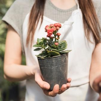 Primer plano de una mujer que sostiene la planta en maceta flor roja