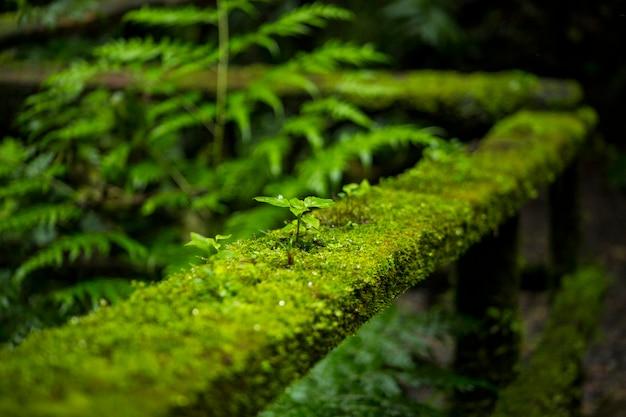 Primer plano de musgo en la baranda de una valla en la selva tropical de costa rica