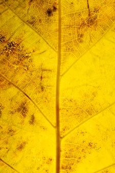 Primer plano de los nervios de la hoja amarilla