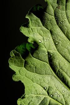 Primer plano de los nervios de la hoja verde con gotas de agua